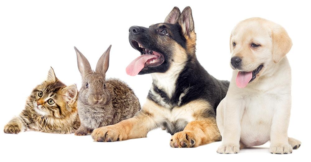 Gamlebyen Dyreklinikk Veterinær - Katt, kanin, to hunder-dyreklinikk oslo-dyrlege oslo-veterinær oslo-veterinærklinikk oslo-tannrens hund oslo-rotfylling hund oslo-syk papegøye-syk undulat-papegøye veterinær-papegøye dyrlege-undulat dyrlege-tannbehandling hund oslo-kirurgi hund-kirurgi katt-kirurgi kanin-kirurgi fugl-kirurgi dyr